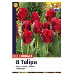Tulipany Rococo, CJBB482