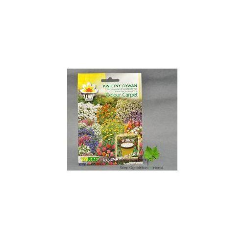 Kwietny dywan mieszanka kwiatów karłowych (Toraf)