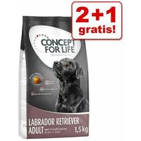 2+1 gratis! karma sucha dla psa, 3 x 1,5 kg - mini adult marki Concept for life