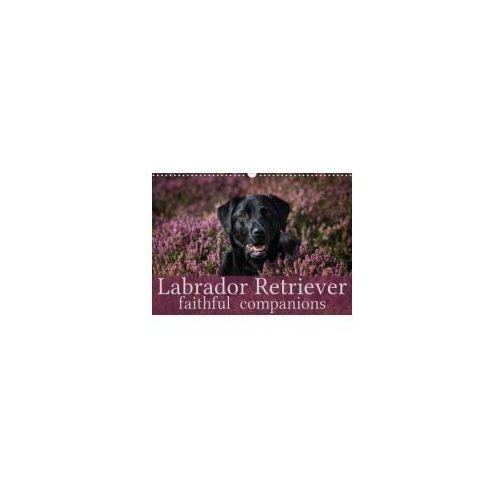 Labrador Retriever - Faithful Companions 2018