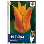 Tulipany Ballerina