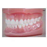 Model stomatologiczny zgryz idealny, baza różowa, wielkość naturalna marki Falcon