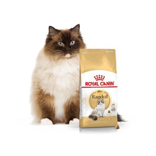 Royal canin Fbn ragdoll 10 kg (3182550825375)