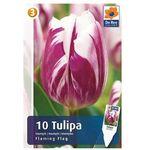 Tulipany Flaming Flag (8711148219682)