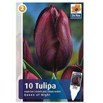 Tulipan Queen of Night (8711148313533)