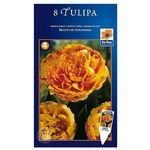 Tulipan Beauty od Apeldo, CJSU007