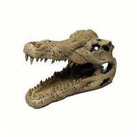 Trixie dekoracja czaszka krokodyla duża 14 cm - darmowa dostawa od 95 zł! (4011905087122)