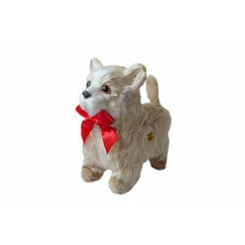 Maskotka Piesek interaktywny chodzący - chihuahua, 5_697756