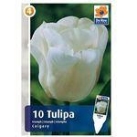 Tulipany Calgary (8711148318408)