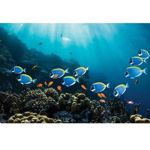 Rybki Pokolec Białobrody I Złota Rybka Rafa Koralowa Plakat Galeria