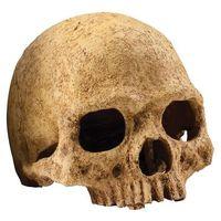 Exo terra kryjówka czaszka ludzka Dostawa GRATIS od 99 zł + super okazje