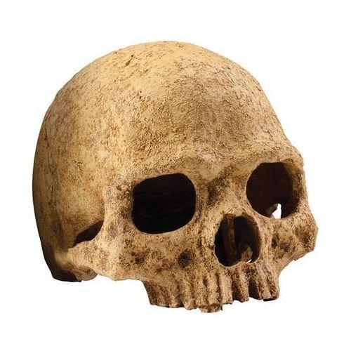 Exo terra kryjówka czaszka ludzka
