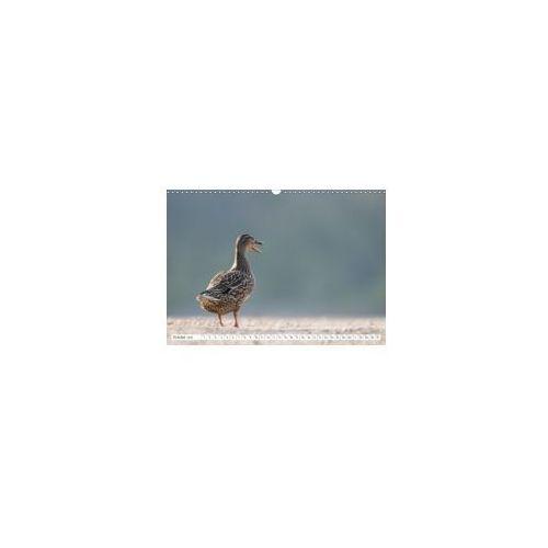 Emotional Moments: Wild Ducks. / UK-Version 2018