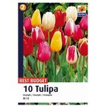 Tulipany Triumph (8711148317838)