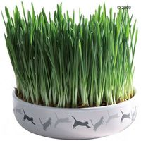 Trixie ceramiczna miska z trawą dla kota - Ø 15 x 4 cm + 50 g nasion trawy (4011905423418)