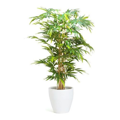 Drzewko bambusowe 1500 mm dostarczany z białą donicą marki Aj