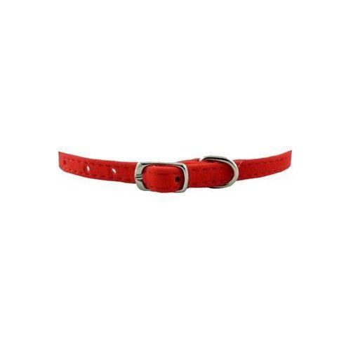 CHABA Obroża welurowa czerwona długość 34cm