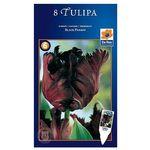 Tulipany Black Parrot (8711148316206)