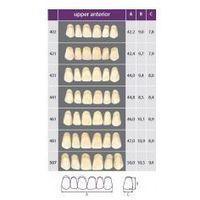 Zęby przednie górne Classic Wiedent 6szt, 3325