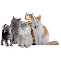 Forza10 Próbki karm dla kotów: z karmą - forza10 dostawa 24h gratis od 99zł