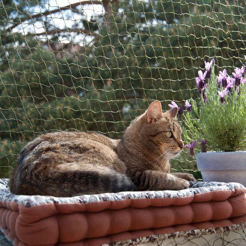 Wzmocniona siatka ochronna dla kota, oliwkowa - 4 x 3 m| -5% Rabat dla nowych klientów| DARMOWA Dostawa od 99 zł (4054651550229)