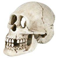 TRIXIE Dekoracja czaszka 15 cm - DARMOWA DOSTAWA OD 95 ZŁ!