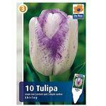 Tulipany pojedyncze późne (8711148313557)