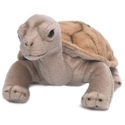 Żółw lądowy 20 cm, A (4684894)