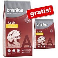 Briantos 14 kg + 3 kg gratis! sucha karma dla psa, 17 kg - adult, jagnięcina & ryż (4260358510774)