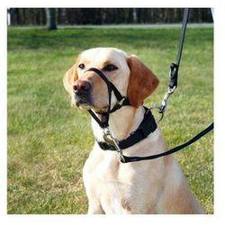 Smycze i szelki dla psów  Trixie FERA.PL