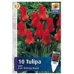 Tulipan Red Riding Hood