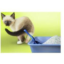 Pozostałe dla kotów   AnimalCity.pl