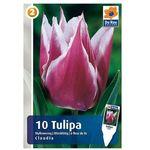 Tulipany Claudia