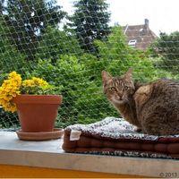 Siatka ochronna dla kota, przezroczysta - 2 x 1,5 m| darmowa dostawa od 89 zł i super promocje od zooplus! marki Zooplus exclusive