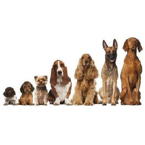 Próbki karm dla psów: z karmą - Forza10 DOSTAWA 24h GRATIS od 99zł