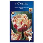 Tulipan Wirosa, CJSU016