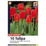 Tulipan Darwin Apeldoorn (8711148316695)